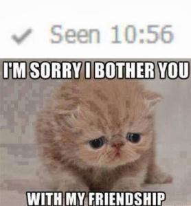 seen-sad-cat-meme