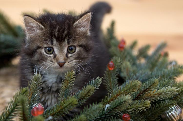 kitten-2965641_1920